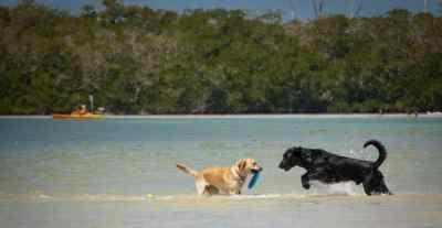summertime dog