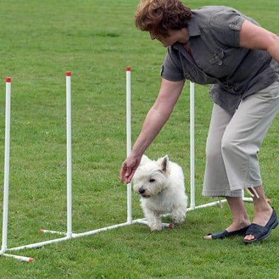 Teaching your dog agility from a young age can be a great way to strengthen your bond.