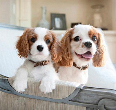 favorite person dog socialization matters