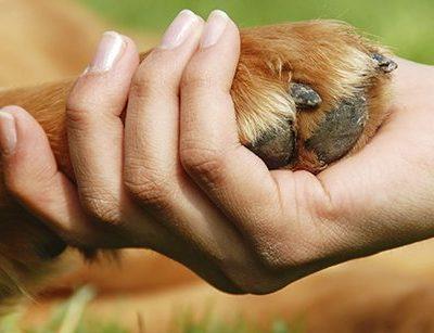 dogs toenails