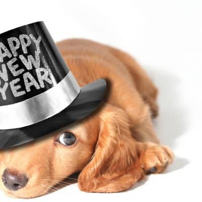 resolutions, dog resolutions