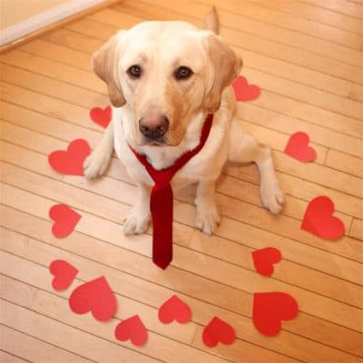 valentine's day dog